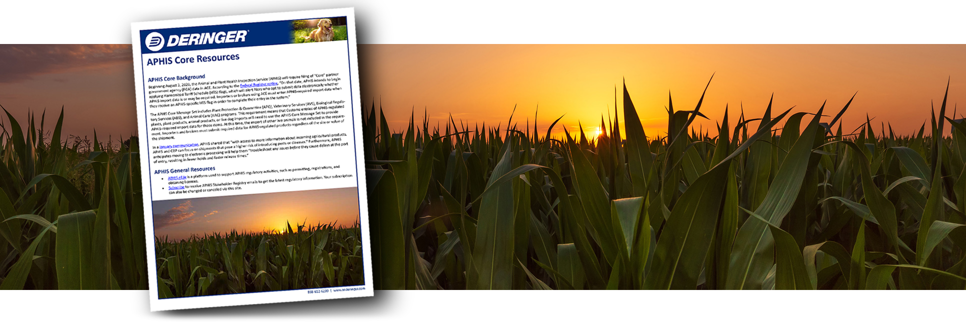 corn header with document3